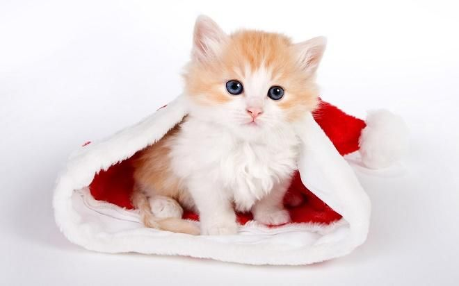 Covesia.com - Sebuah rumah penyelamatan hewan terlantar di London, Inggris, Battersea Dogs & Cats Home, memberikan penawaran tak biasa bagi siapa yang...