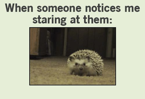 GIF: Staring  - www.gifs-gif.com ▬▬►  IMPORTANT: ALWAYS CLICK ON THE IMAGE to view the original post. Most of the posts have more than one image (Pinterest supports only one image per post so you wont be able to view the full post). Click here to view the full post: http://gifs-gif.com/funny/funny-gif-staring-gifs/