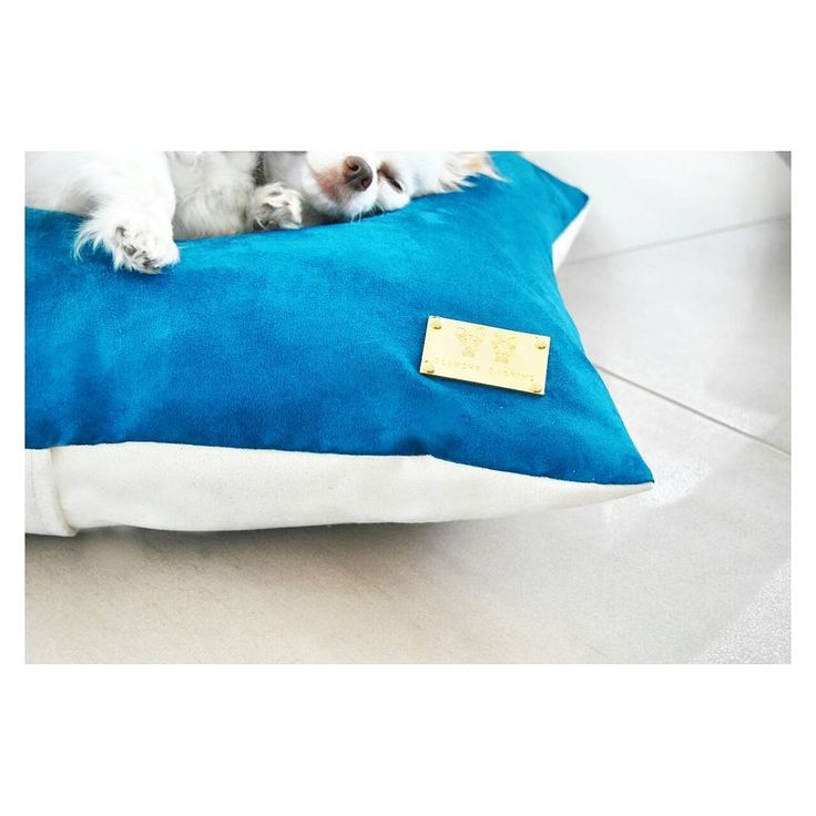 Pet bed cushion velvet branding home design living room pets lover gift blanche Barkins