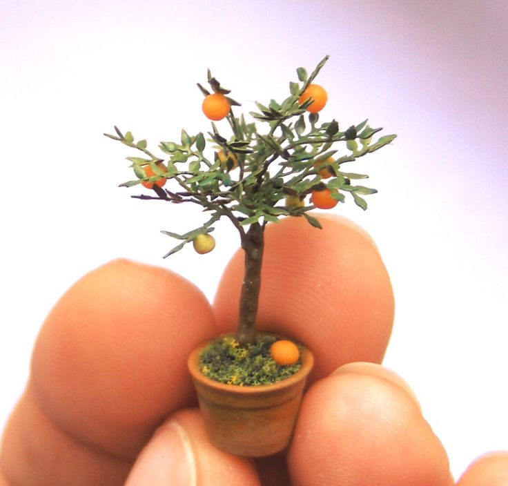 Quarter scale orange tree in pot