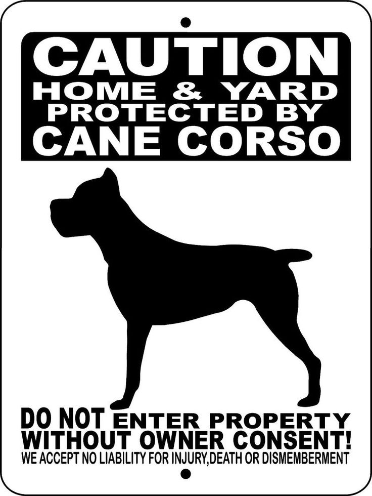 "CANE CORSO DOG SIGN,Guard Dog,Aluminum Sign 12"" x 9"",Security,Gate,H2496HYCCBLK in Collectibles, Animals, Dogs 