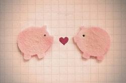 PIGGY LOVE