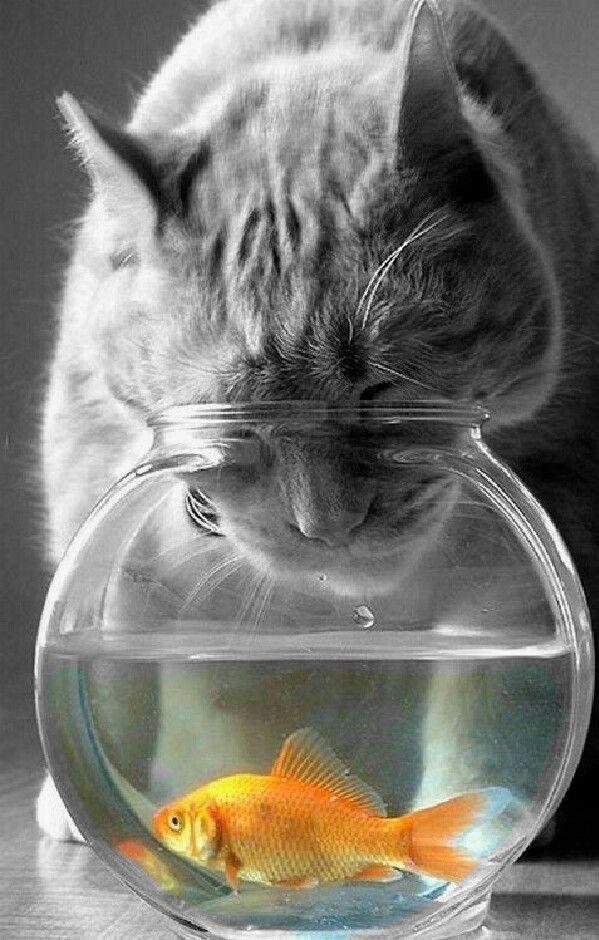 Золотая рыбка прикол картинка