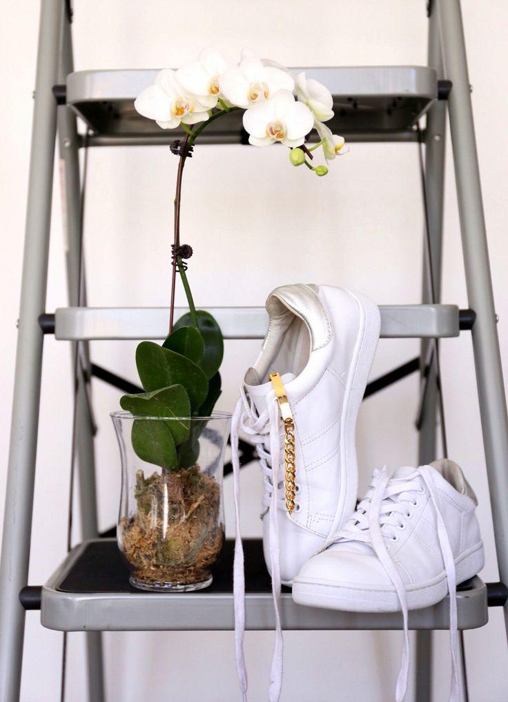 Classic white sneaker
