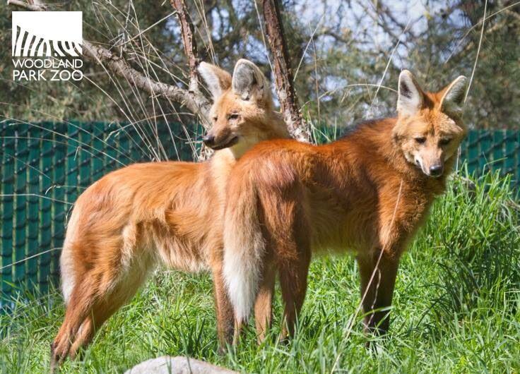 Wild Dog Exhibit Woodland Park