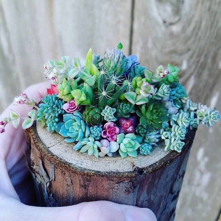 128 отметок «Нравится», 3 комментариев — ДИЗАЙН И АРХИТЕКТУРА  (@artmixd) в Instagram: «Красоты вам в ленту! Сукуленты освежат и оживят любой сдержанный интерьер Мини сады Lost Coast…»