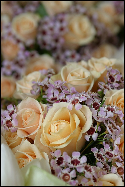 Chantilly Roses and Geraldton Wax.  In winter they can even be slightly darker/brighter.