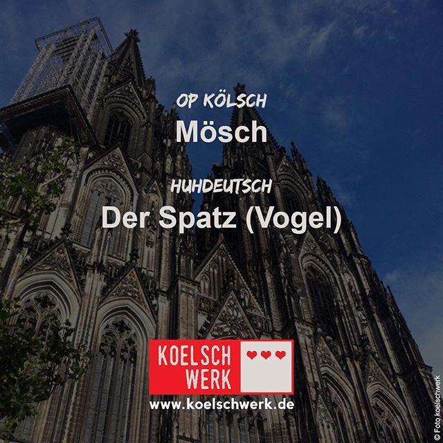 Herrlicher #sonnenschein in Köln... Genießt das schöne Wetter heute! #koelschwerk #mingsproch #cologne #köln #kölsch #mösch #spatz