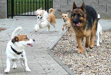Školka pro psy - výběhy
