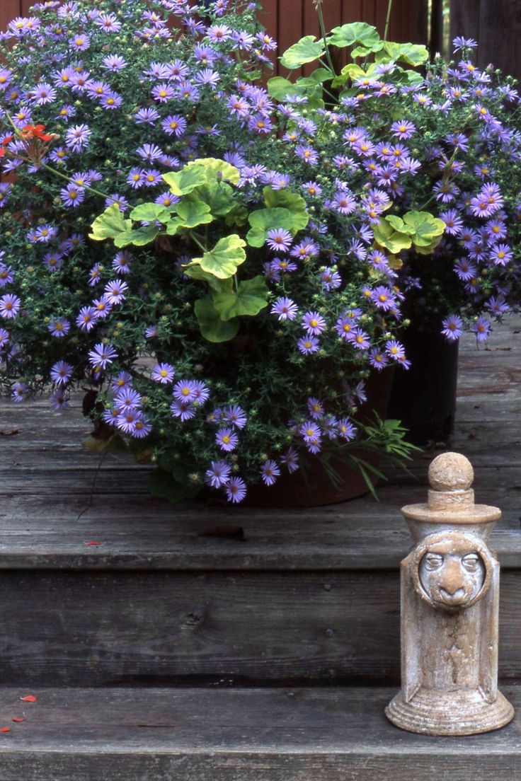 Asters are easy, adaptable. Good in or out of containers. Great for pollinators that need to bulk up before winter arrives. http://www.shadegardenexpert.com/