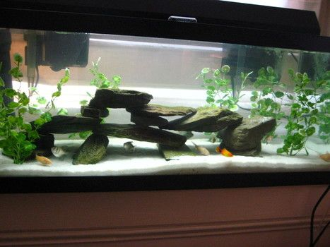 20 best images about aquarium set up ideas on pinterest for Setting up a fish tank