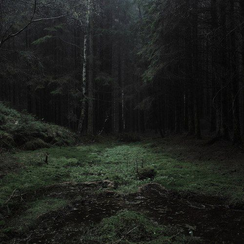 dark forests S✧s                                                                                                                                                                                 More