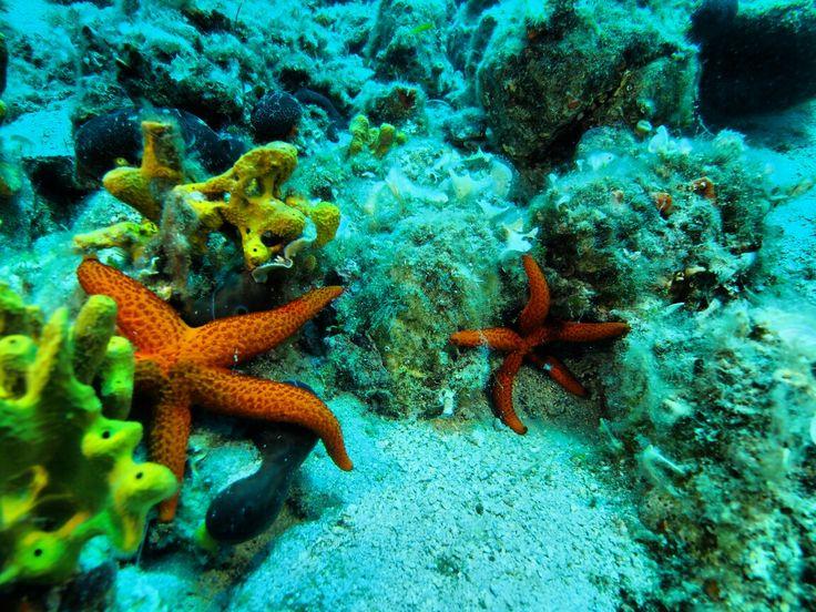 Ayvalık dalış okulu - ida dalış merkezi #scuba #scubadiving #diving #underwater #dalisnoktam #ayvalikdalis #idadalismerkezi www.idadiving.com