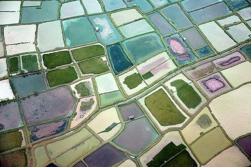 Aerial view of rice fields in Indonesia