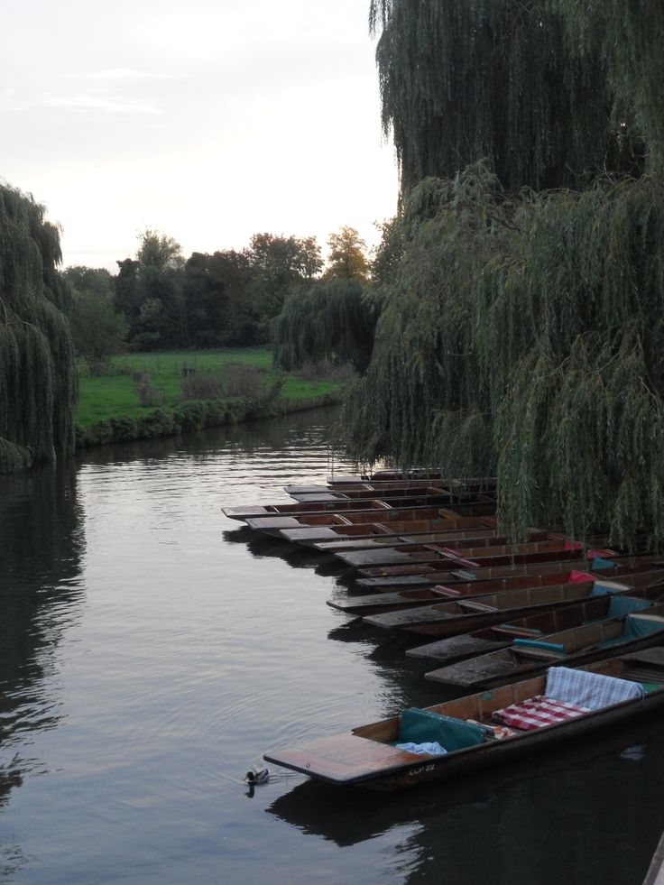 @ Cambridge [United Kingdom]