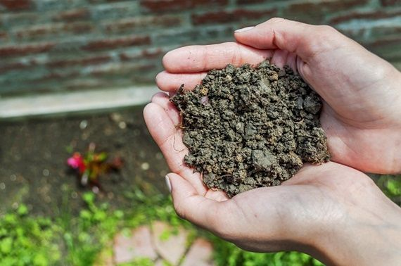 The differences between lawn soil types