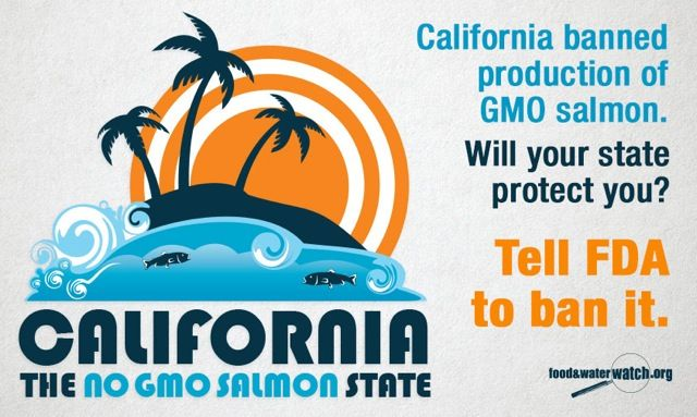 California has a new law that bans commercial production of #GMOsalmon within its borders, so we created this image. We think it would look groovy on the side of a van. Tell the FDA to ban #GMO salmon in all 50 states! http://fwwat.ch/1qoxEKr