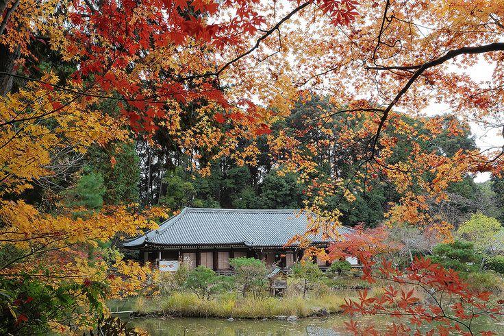 Kyoto Jyoururi-ji temple , JAPAN , Canon EOS 5D Mark II , EF17-40mm/F4 別名、九体寺。 本堂内には九体の阿弥陀像が横一列に安置されているんですよ。