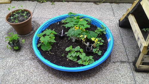 Richmond Public Library Gardening Project for Teens. Swimming Pool Planter