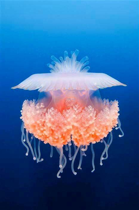 Jellyfish ~Looks like an ET or other alien flying vessel ETS