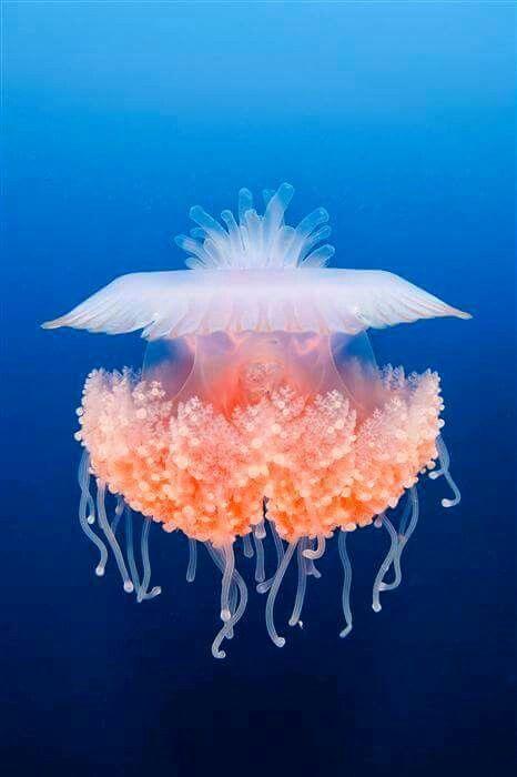 Jellyfish ~Looks like an ET or other alien flying vessel ETS