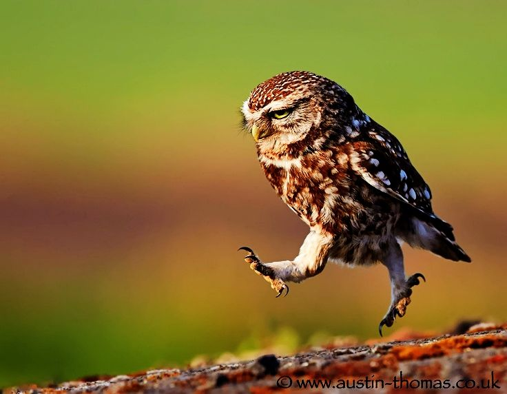 Little Owl in A Hurry, just like My little daughter...