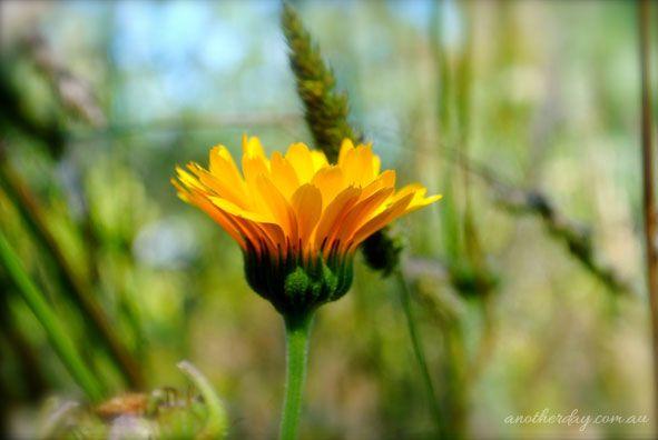 Use Earthschooling  In Tasmania