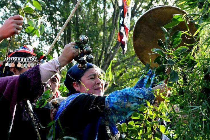En Temuco: Machi Cecilia Marinao, del sector Codopille, realizando llellipun por el inicio de las celebraciones de Wetxipantü, en el sector de los Chemamüll del Cerro Ñielol.