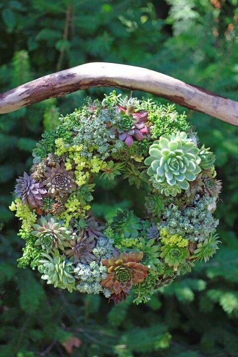 Succulent wreath on driftwood hanger