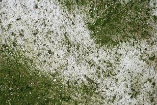 How to Get Rid of Green Algae on Cement or Concrete | eHow