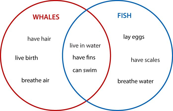 005 Create Venn Diagram Worksheets Venn diagrams Animals 2