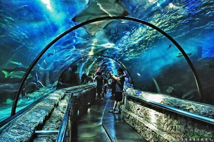 SeaWorld Indonesia tunnel, Jakarta