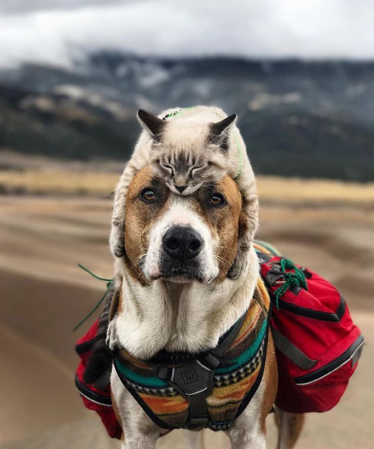 This Cat And Dog Are Travelling The World Together On An Epic Adventure And The Whole Thing Is Too Adorable