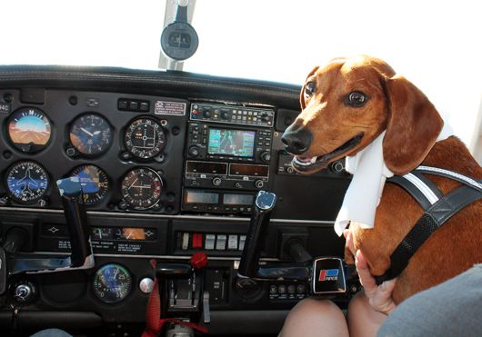 Want to know how to travel with your emotional support dog or cat in an airplane? Find out the airline rules and regulations for your ESA travel letter.