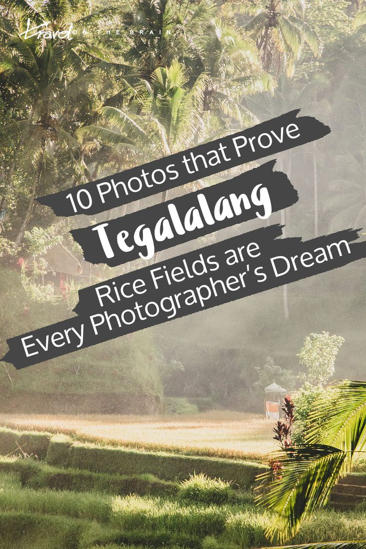 10 Photos that Prove Tegalalang Rice Terraces are Every Photographer's Dream