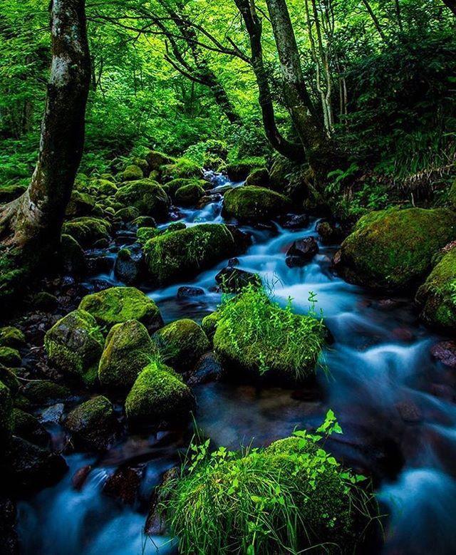 【RETRIP×木谷沢渓流】 鳥取県にある木谷沢渓流は、奥大山(おくだいせん)の清流に親しめる場所として人気があります。神秘的な雰囲気が漂い、五感で自然を感じることができます。5年前の台風の大きな被害がありましたが、ここまで復活しました。  このお写真は @mat.akitaka さんにお借りしました。素敵なお写真をありがとうございます!  #RETRIP #retrip_nippon #リトリップ #リトリップ国内 #鳥取 #江府町 #奥大山 #木谷沢 #渓流 #苔 #清流 #絶景 #マイナスイオン #tottori #kofu #okudaisen #kitanizawa #beautiful #stream #moss #amazing #japan #travel #retrip_kn . 毎日更新中!】 RETRIPではグルメ(@retrip_gourmet)、海外の絶景(@retrip_global)、絶景まとめ(@retrip_news)のご紹介もしております。よろしければ遊びにきてくださいね。