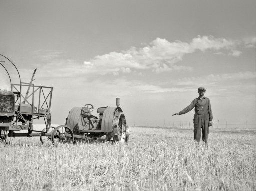 "July 1936. ""John Frederick of Grant County, North Dakota, shows how high his wheat would grow if there were no drought."""