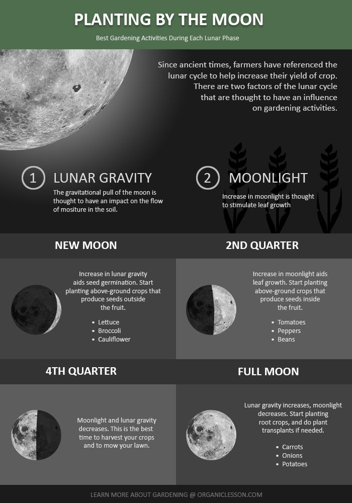 Planting By The Moon - An infographic guide. Learn the basics of using the lunar cycle to boost your gardening efforts.