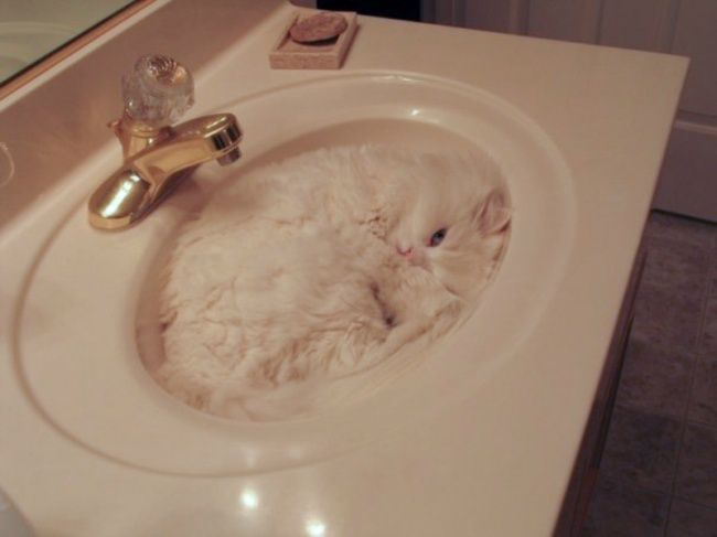 The 30 funniest photos of cats sleeping in the most awkward positions. The #6 is so hilarious…Bored Daddy