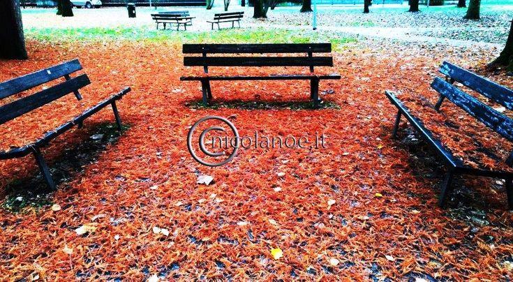 I tappeti di foglie – foliage – Nicola Noe