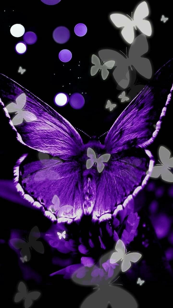Wallpaper Butterfly Background Butterfly Painting Butterfly Art