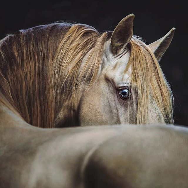 2018/03/04 Horse