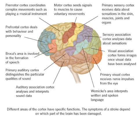stroke info, map of the brain