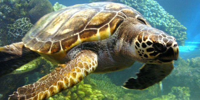 Giornata mondiale delle tartarughe marine