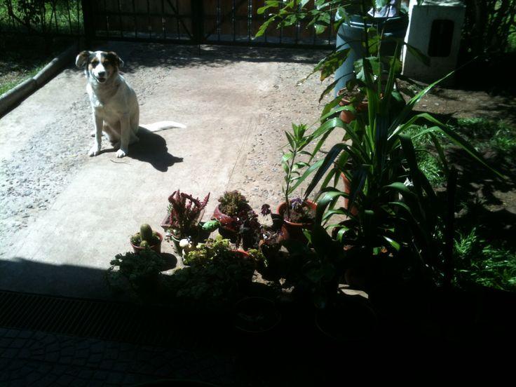 """""""cuidando el jardín""""....."""
