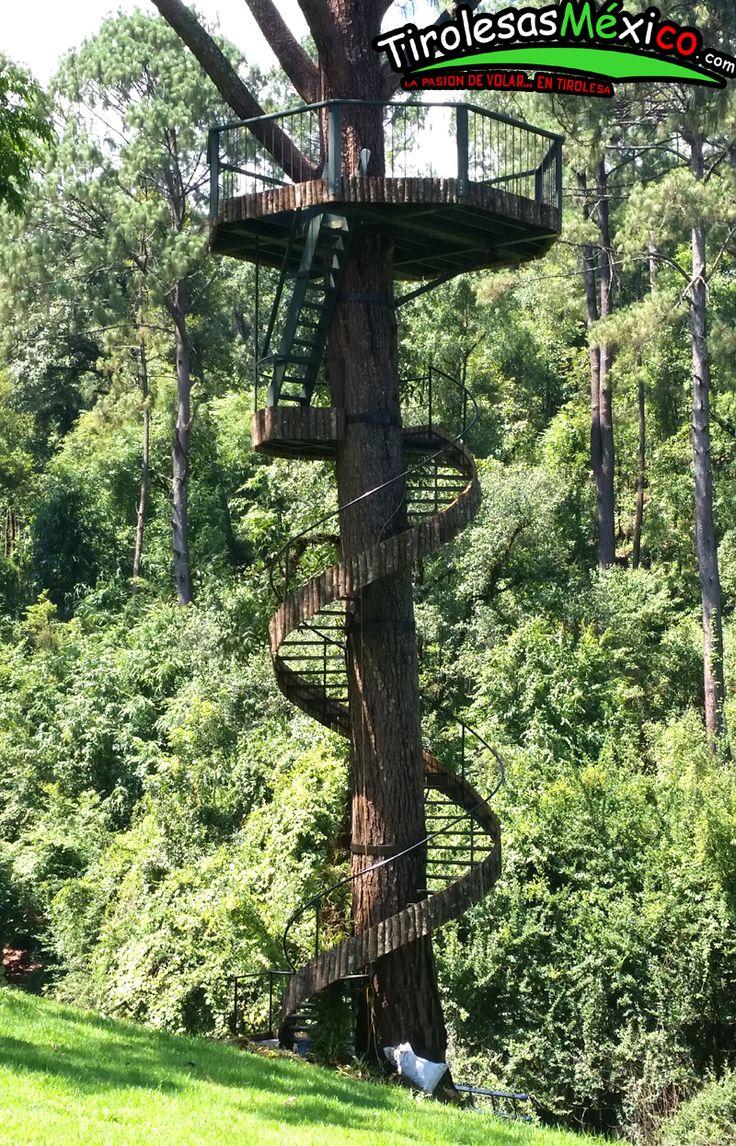 casa de arbol y canopy valle de bravo mexico