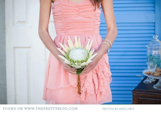 Love the white protea