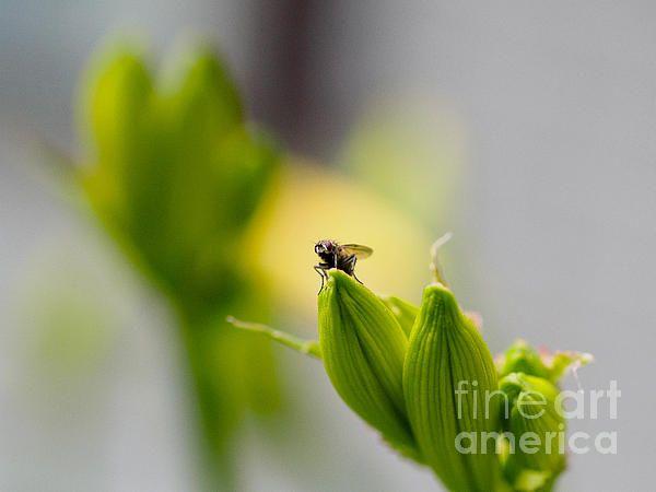 In the garden - The Champ - Ismo Raisanen #art #fineartphotography #photog #deals #ismoraisanen