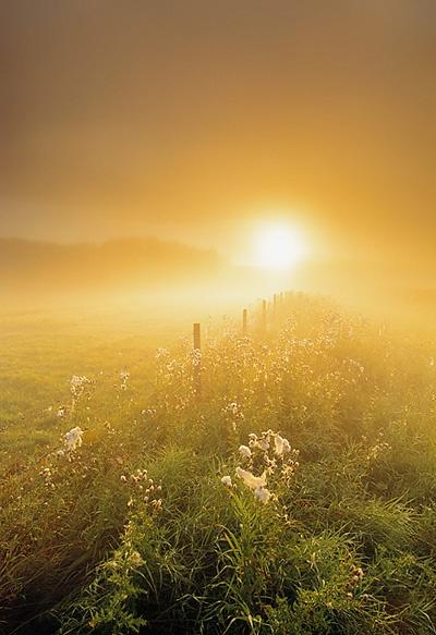 Sunlit Prairie, Alberta Canada