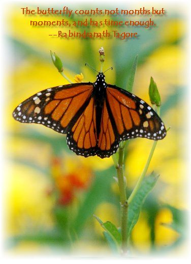 Butterfly quote Butterfly quotes, Flower quotes
